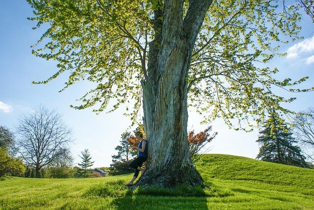 tree-691134_640